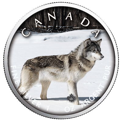 Stříbrná mince Maple Leaf - Wolf (Vlk) 1 Oz 2019 (On the Trails of Wildlife) - (5.)
